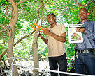 Josphat and team member stablishing mangrove tree girth